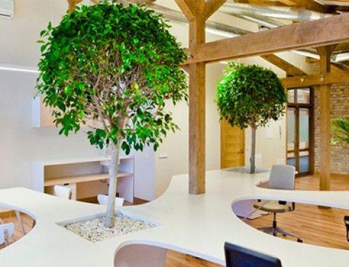 Sigue estos pasos para reducir la huella de carbono en tu oficina (III)